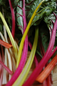 Swiss chard is colorful, tastes like spinach and grows well in Texas.
