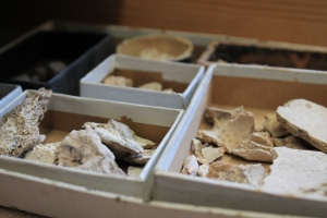 Small, cardboard boxes house fossils from the 1800s.