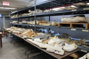 The lab houses thousands and thousands of fossils.