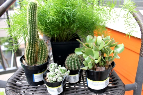 Popular plants include ferns, cacti, and succulents.