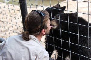 One of the three black bear cubs at the Austin Zoo and Animal Sanctuary shows affection by playfully kissing his zookeeper.