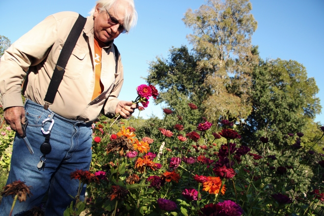 Clark shows me his zinnia garden. Zinnias are his favorite flower to grow.